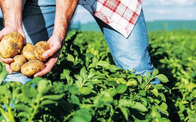 «Au sein de la coopérative Biocoop, les producteurs ont un vrai pouvoir»